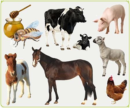 kit pédagogique filière animale