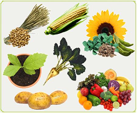 kit pédagogique filière végétale
